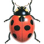 audubon-icon