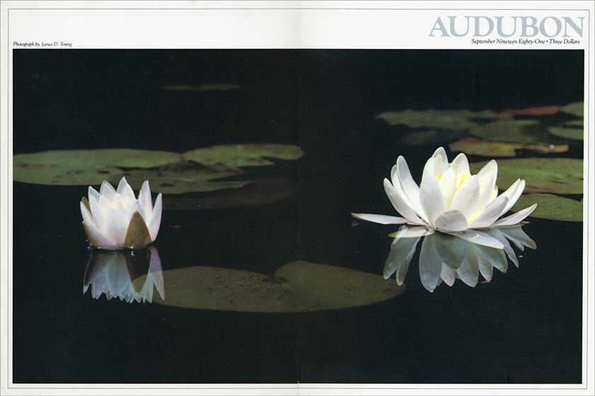 aud_cover